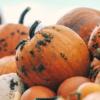 かぼちゃの馬車がサブリース賃料改定通知!?オーナーの皆さん、大丈夫か?