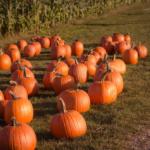10人のかぼちゃの馬車オーナーと話してわかった!オーナーが今後取りうる戦略【スマートデイズ/サブリース賃料引き下げ問題】